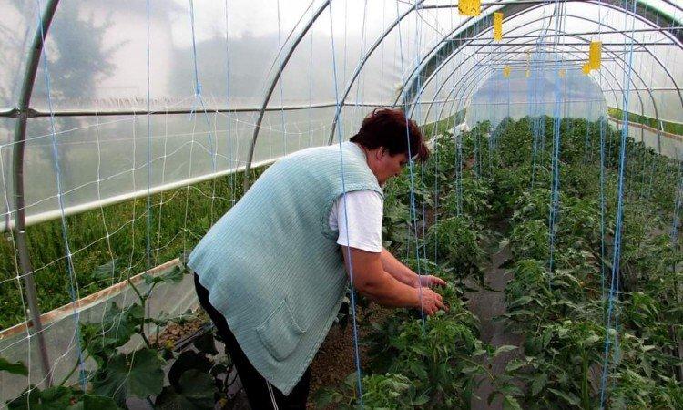 Vlada ZDK isplatila poljoprivrednicima 356.000, odobrena isplata još 557.000 KM